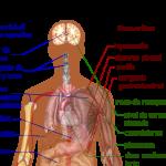 Coronavirus (COVID-19, SARS-CoV-2): ¿El Dengue es Peor? (Epidemia, España)